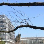 Programme culturel du printemps de la faculté des sciences de la vie et du Jardin botanique