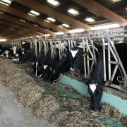 GAEC des 4 Ponts : du lait, des céréales et des betteraves