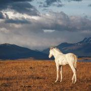 Patagonie : à la lisière du monde