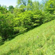 Chantier Nature : Ratissage et entretien de pelouses sèches dans le Jura Alsacien