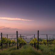 L\'invitation au voyage : les vins du mondes