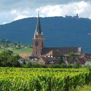 Visite commentée du Sentier viticole de Bergheim