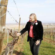 Le vignoble aux 5 sens - Alsace Ecotourisme