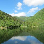 Spectacle de l'eau et de la forêt