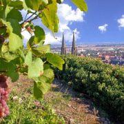 Découverte du sentier viticole