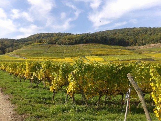 Les belles couleurs du vignoble de Guebwiller