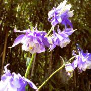 Fleurs : en pots ou en terre, comment les entretenir  ?