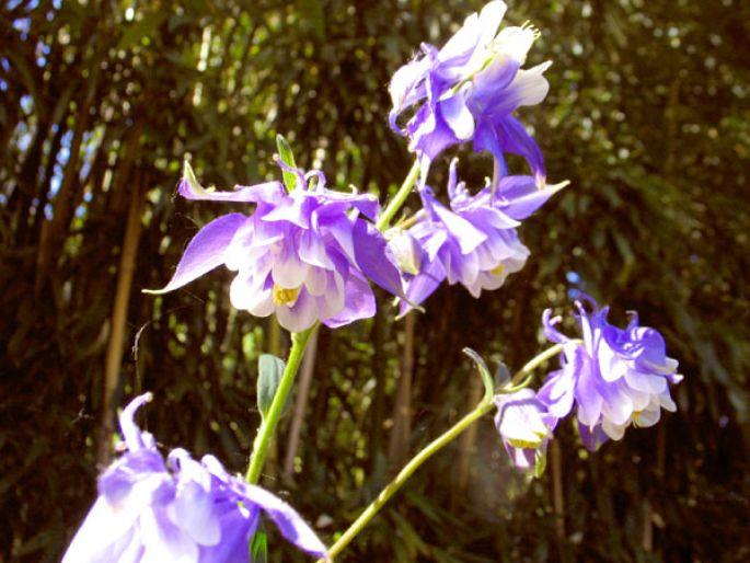 A l\'intérieur ou à l\'extérieur, les fleurs égayent votre environnement