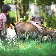 Anniversaire au Zoo de Mulhouse