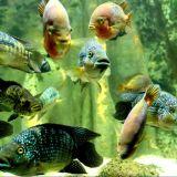 Aquarium Les 3 Vagues