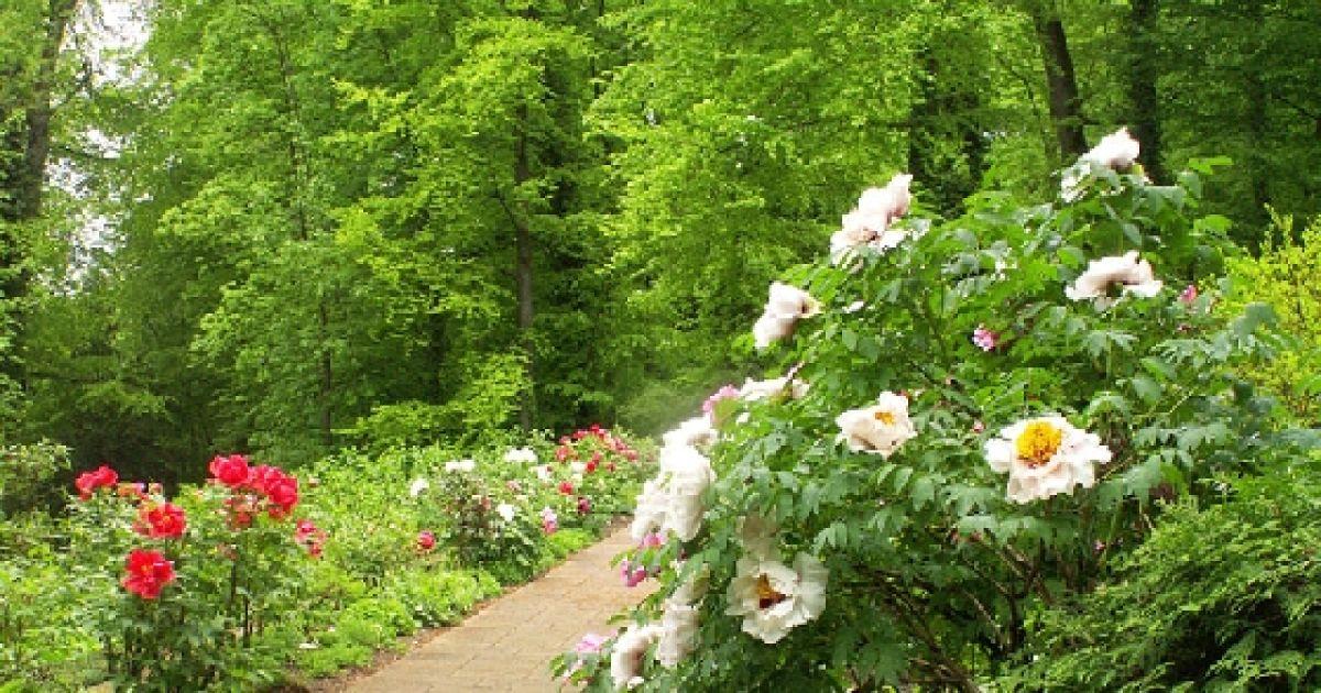 t moignage les secrets d 39 un jardinier professionnel mulhouse colmar cernay haut rhin 68. Black Bedroom Furniture Sets. Home Design Ideas