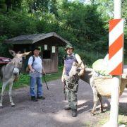 Alsace Ecotourisme : Au pas de l\'âne