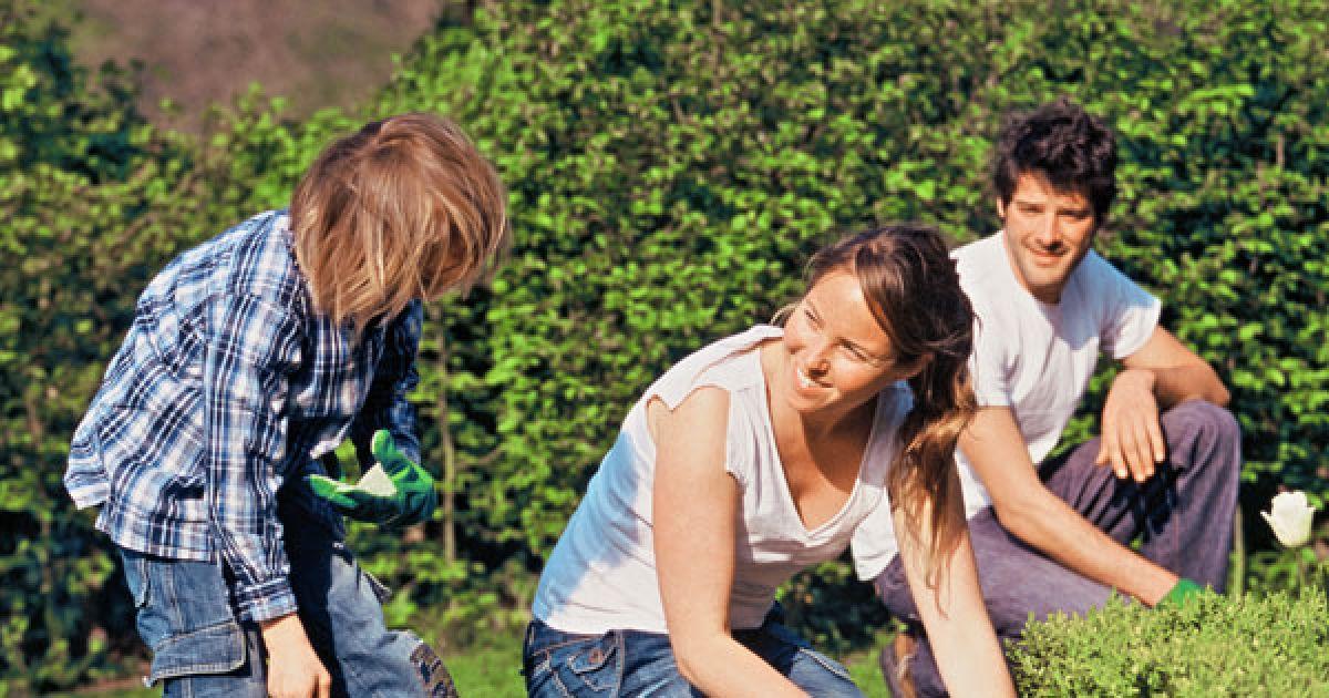 L 39 entretien du jardin en avril semences pelouse taille for Entretien jardin strasbourg