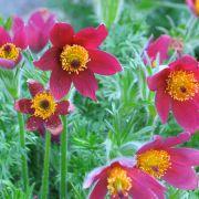 Avril : redécouvrez votre jardin