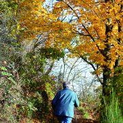 Escapade à Thann, autour du Vignoble du Rangen