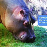 Basim Magdy : Un Paon et un Hippopotame se lancent dans un Débat Existentiel