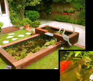 Jardin : Bassins, des biotopes à observer au quotidien