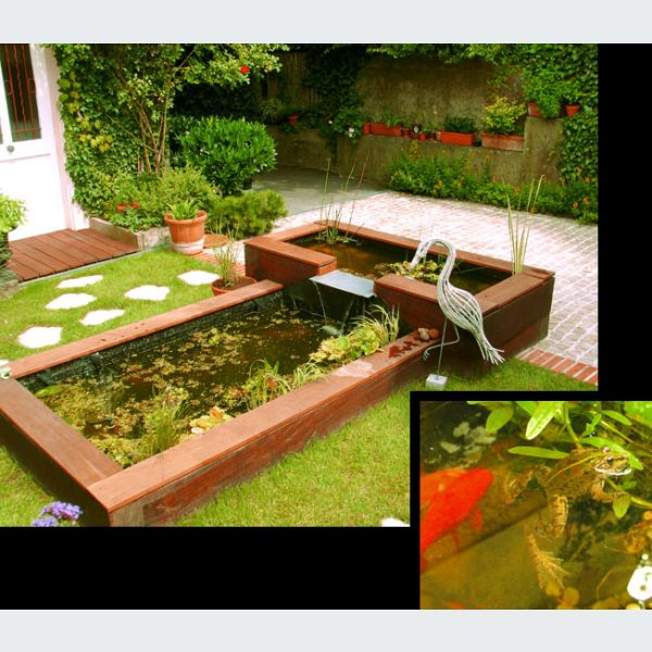 Jardin bassins des biotopes observer au quotidien for Algues bassin de jardin