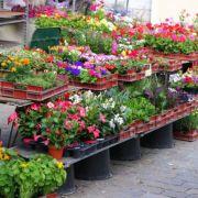 Troc aux plantes à Marly 2019