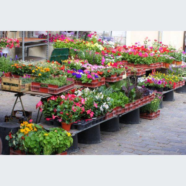 Foire aux plantes avolsheim 2015 bourse aux plantes for Achat de plantes sur internet