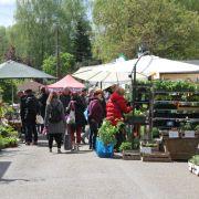 Bourse aux plantes à Kutzenhausen 2020
