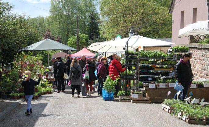 Bourse aux plantes à Kutzenhausen
