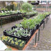 Bourse aux plantes à Kutzenhausen 2019