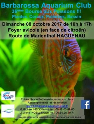 Bourse aux poissons d\'aquarium à Haguenau 2017