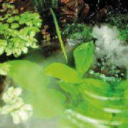 Les différentes sources d\'eau pour agrémenter le jardin