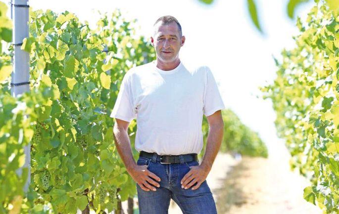 Bruno, dans ses vignes du Centre Alsace