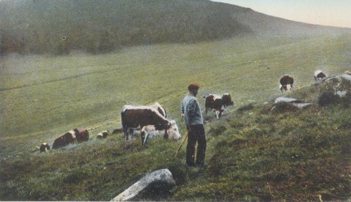 Les Transhumances sont l\'occasion de fêter le déplacement du bétail vers des pâturages plus cléments.