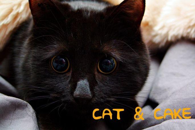 Le salon de thé à chats Cat & Cake