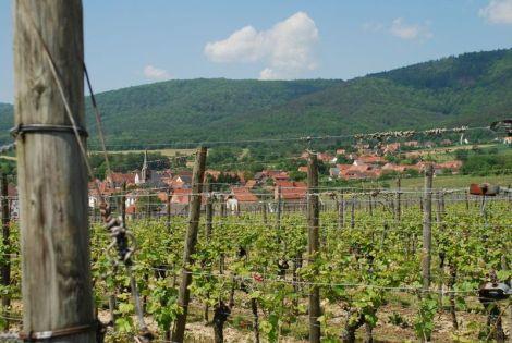 Le vignoble de Cleebourg
