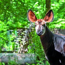 Cet été au Zoo de Mulhouse