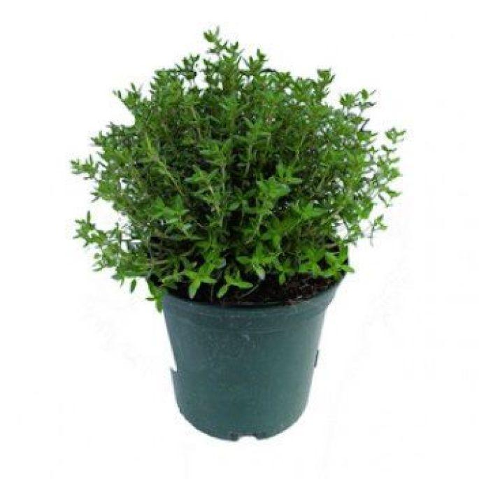 Choisissez une plante aromatique ou un légume à faire pousser :