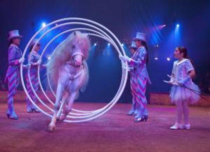 La Cité du Cirque : spectacle de la tournée 2009 du Cirque Gruss