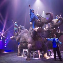 Cirque Arlette Gruss : Et l\'on réinventa le cirque