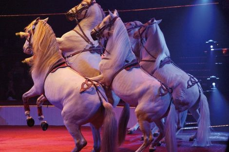 La cavalerie de Gianni d\'Ambrosio est en piste