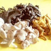 Comment laver les champignons frais ?