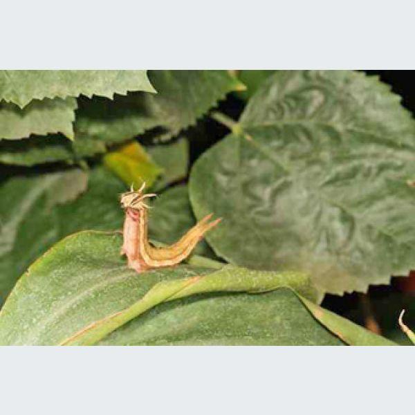 Comment venir bout des ind sirables - Comment se debarrasser des araignees a l exterieur ...