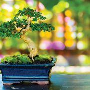 Congrès mondial du bonsaï à Mulhouse