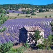 Connaissance du Monde : La Provence
