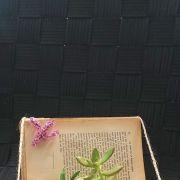 D'Âme Nature : la tournée des fleurs