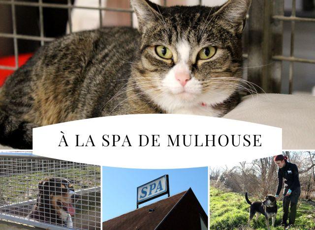 Dans Les Coulisses De La Spa Mulhouse Un Endroit Qui A Du Chien Actu Magazine Refuge Spa
