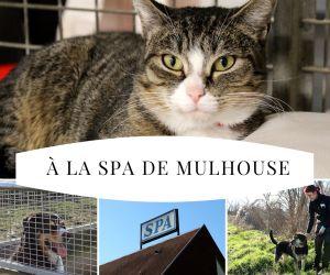 Dans les coulisses de la SPA Mulhouse : un endroit qui a du chien!