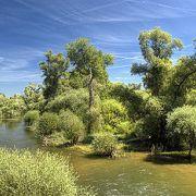 Le Delta de la Sauer