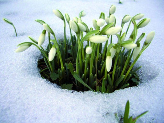 Des fleurs dès le début de l\'année!