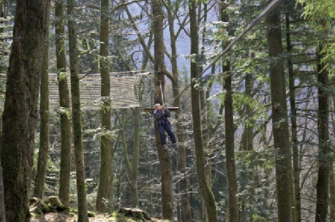 Des voies d'aventures pour s'amuser en pleine forêt