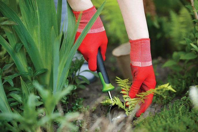 Retirer les mauvaises herbes dès mars et avril pour ne pas vous laisser envahir
