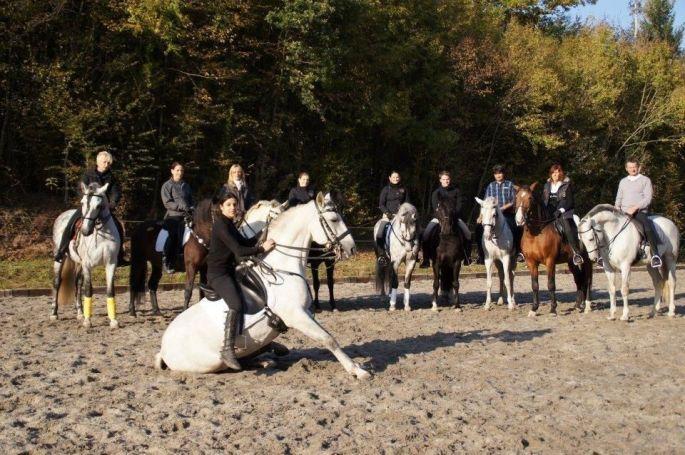Les chevaux à l\'honneur à Saverne